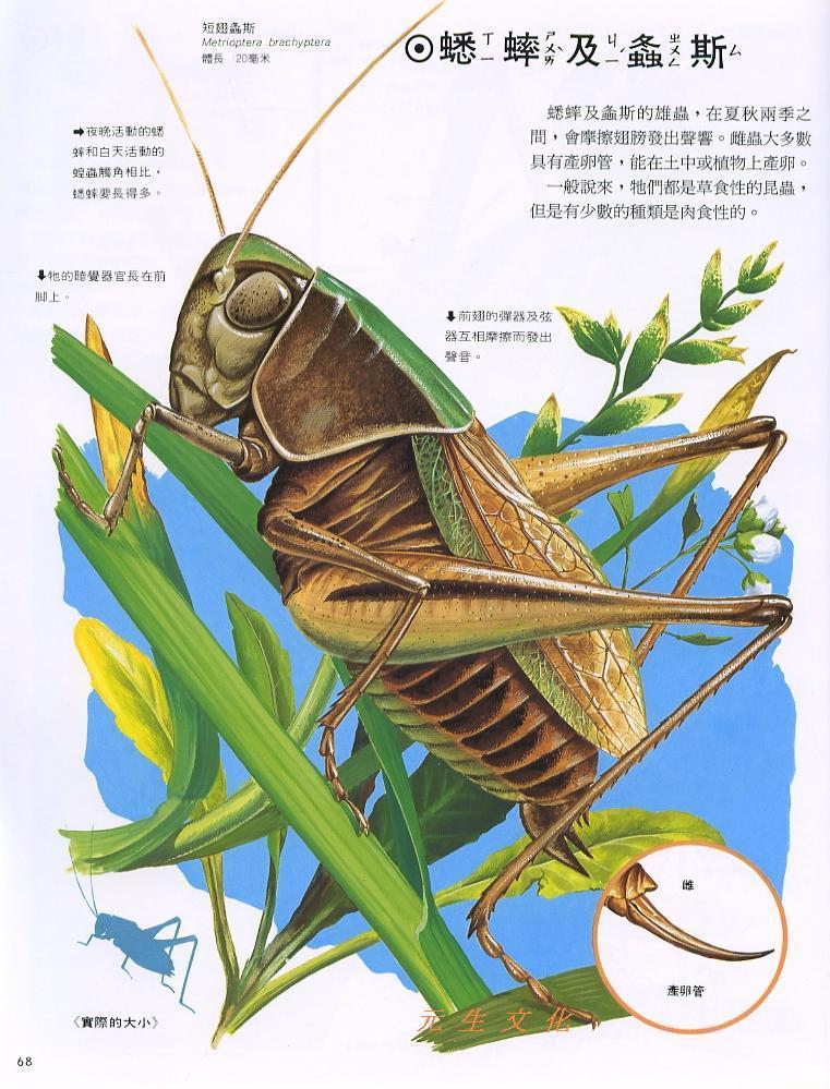 世界动物图鉴 内页图片(一)